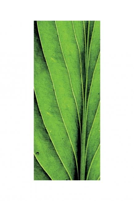 Зелено листо